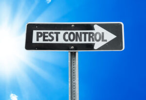 pest control - Termite treatment